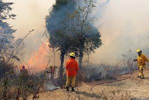 Por los incendios declaran la emergencia agropecuaria en Córdoba