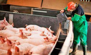 Acuerdo con China: diputado radical advierte más dudas en torno a las megafactorías porcinas