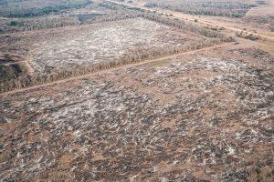 A pesar de la cuarentena, se deforestó dos veces el tamaño de la Ciudad de Buenos Aires