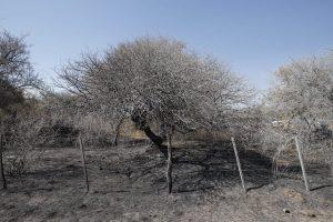 Incendios: la bancada radical impulsa la obligatoriedad de reforestar y no cambiar el destino del suelo