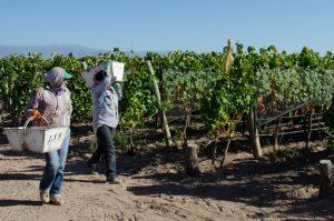 Presentaron la mesa de pronóstico de cosecha para la vitivinicultura